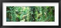Framed Vegetation Seychelles