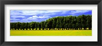Framed Row Of Trees, Uppland, Sweden