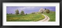 Framed Meadow Of Dandelions, Zug, Switzerland