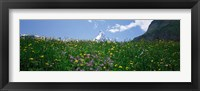 Framed Wild Flowers, Matterhorn Switzerland