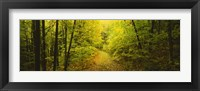 Framed Dirt road passing through a forest, Vermont, USA