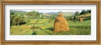 Framed Farm, Transylvania, Romania