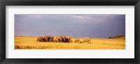 Framed Elephant Herd, Maasai Mara Kenya