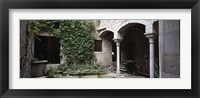 Framed Ivy on the wall of a house, Girona, Spain