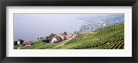 Framed Vineyards, Lausanne, Lake Geneva, Switzerland