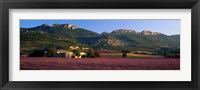 Framed Lavender Fields And Farms, High Provence, La Drome, France