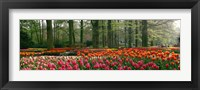 Framed Keukenhof Garden, Lisse, The Netherlands