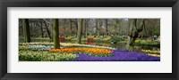 Framed Keukenhof Garden Lisse The Netherlands