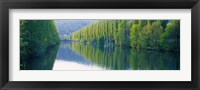 Framed Poplar Trees On River Aare, Near Canton Aargau, Switzerland