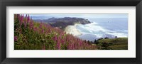 Framed Foxgloves At Cascade Head, Tillamook County, Oregon, USA