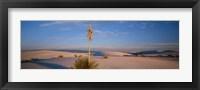 Framed Shrubs in the desert, White Sands National Monument, New Mexico, USA