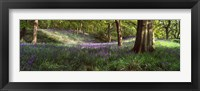 Framed Bluebells In A Forest, Newton Wood, Texas, USA