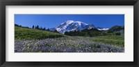 Framed Wildflowers On A Landscape, Mt Rainier National Park, Washington State, USA