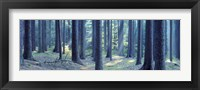 Framed Trees in a forest, South Bohemia, Czech Republic