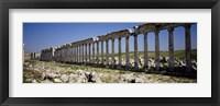 Framed Row of Columns, Cardo Maximus, Apamea, Syria