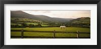 Framed Horse in a field, Enniskerry, County Wicklow, Republic Of Ireland