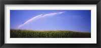 Framed Water being sprayed on a corn field, Washington State, USA
