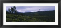 Framed Manzanita Trees in Deschutes National Forest
