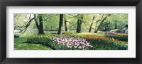 Framed Flowers in a garden, Keukenhof Gardens, Netherlands