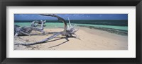 Framed Driftwood on the beach, Green Island, Great Barrier Reef, Queensland, Australia