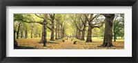 Framed Trees along a footpath in a park, Green Park, London, England