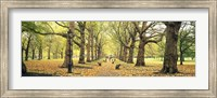 Framed Trees along a footpath in a park, Green Park, London, England