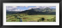 Framed High angle view of a field with mountains in the background, Hanalei Valley, Kauai, Hawaii, USA