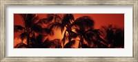 Framed Palm trees at dusk, Kalapaki Beach, Hawaii
