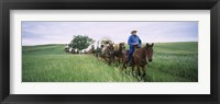 Framed Historical reenactment of covered wagons in a field, North Dakota, USA