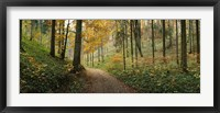 Framed Road passing through a forest, Baden-Wurttemberg, Germany