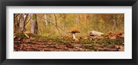 Framed Mushroom on a tree trunk, Baden-Wurttemberg, Germany