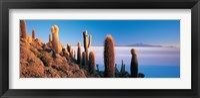 Framed Cactus on a hill, Salar De Uyuni, Potosi, Bolivia