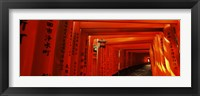 Framed Torii gates of a shrine, Fushimi Inari-Taisha, Fushimi Ward, Kyoto, Kyoto Prefecture, Kinki Region, Honshu, Japan