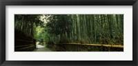 Framed Road passing through a bamboo forest, Arashiyama, Kyoto Prefecture, Kinki Region, Honshu, Japan