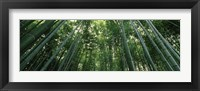 Framed Low angle view of bamboo trees, Arashiyama, Kyoto Prefecture, Kinki Region, Honshu, Japan
