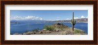 Framed Cactus at the lakeside with a mountain range in the background, Lake Pleasant, Arizona, USA
