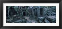 Framed Overgrown tree roots on ruins of a temple, Ta Prohm Temple, Angkor, Cambodia