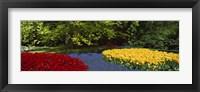 Framed Flowers in a garden, Keukenhof Gardens, Lisse, Netherlands