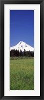 Framed Field with a snowcapped mountain in the background, Mt Hood, Oregon (vertical)