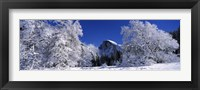 Framed Half Dome, Yosemite National Park, Mariposa County, California