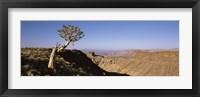 Framed Lone Quiver tree (Aloe dichotoma) in a desert, Ai-Ais Hot Springs, Fish River Canyon, Namibia