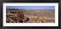Framed Aloe growing at the edge of a canyon, Fish River Canyon, Namibia