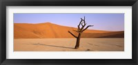 Framed Dead tree in a desert, Dead Vlei, Sossusvlei, Namib-Naukluft National Park, Namibia