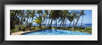 Framed Palm Trees in Maui, Hawaii (horizontal)