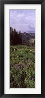 Framed Forest, Washington Gulch Trail, Crested Butte, Gunnison County, Colorado (vertical)