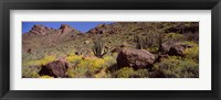 Framed Cacti with wildflowers on a landscape, Organ Pipe Cactus National Monument, Arizona, USA