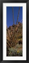 Framed Plants on a landscape, Organ Pipe Cactus National Monument, Arizona (vertical)