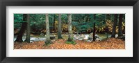 Framed River flowing through a forest, White Mountain National Forest, New Hampshire, USA