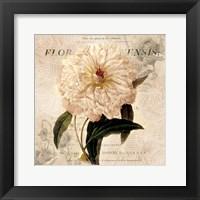 Framed White Peony I