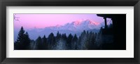 Framed Trees with snow covered mountains at sunset in winter, Combloux, Mont Blanc Massif, Haute-Savoie, Rhone-Alpes, France